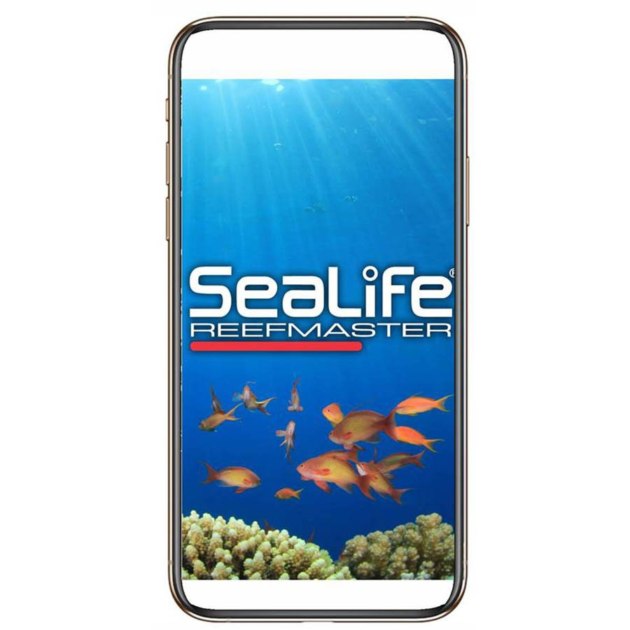 Sealife-Reefmaster RM 4K SL350-Camera app-wobbegong-Duiken
